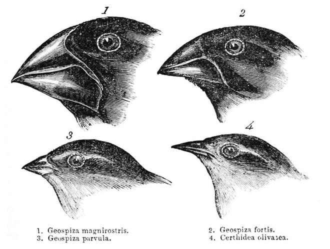Bằng chứng nghiệt ngã của tiến hóa: Chim sẻ cũng phải trở thành loài hút máu để tồn tại - Ảnh 2.