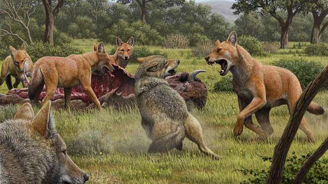 Giới nghiên cứu đã nhầm, Dire Wolves hoàn toàn không phải là sói - Ảnh 1.