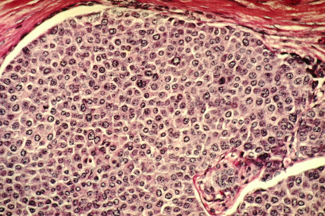 Cứ mỗi giây, có 3,8 triệu tế bào trong cơ thể phải chết đi để bạn được sống - Ảnh 4.