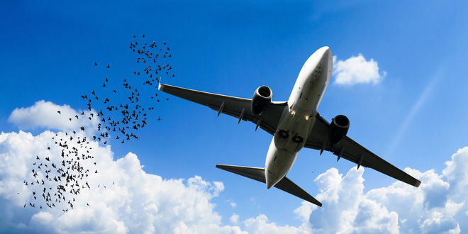 Quá khứ huy hoàng của thám tử lông vũ - người đã thay đổi ngành hàng không bằng nghiệp vụ pháp y - Ảnh 4.