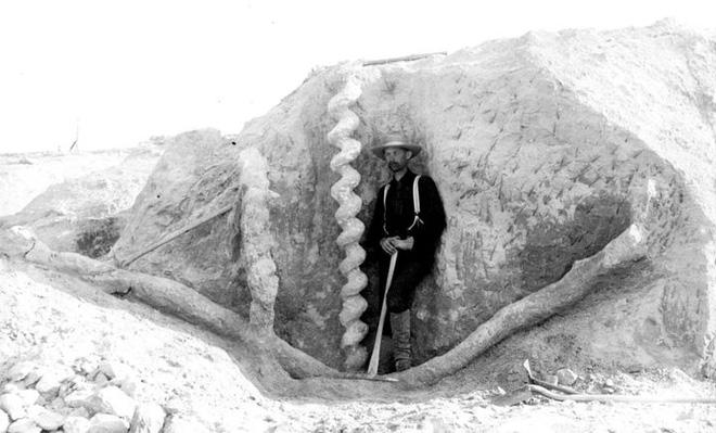 Ai là người đã làm ra cái vặn nút chai của quỷ cao hơn hai mét này từ hàng triệu năm trước? - Ảnh 1.