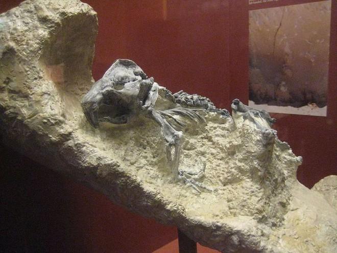 Ai là người đã làm ra cái vặn nút chai của quỷ cao hơn hai mét này từ hàng triệu năm trước? - Ảnh 3.