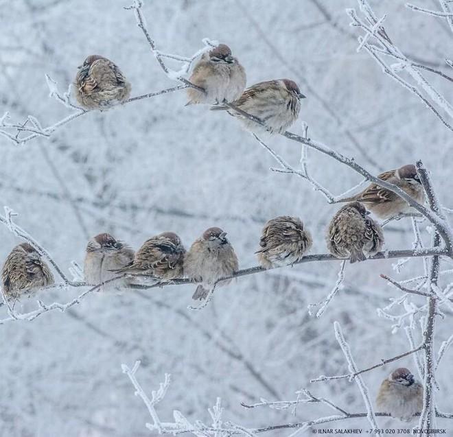 Những bức ảnh cho thấy thời tiết ở Nga lạnh vô đối như thế nào - Ảnh 7.