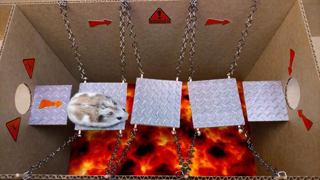 Cưng xỉu với màn giải mã mê cung của chú chuột hamster, vừa đáng yêu vừa gay cấn như series Vượt ngục - Ảnh 6.