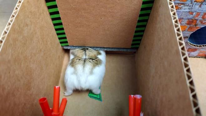 Cưng xỉu với màn giải mã mê cung của chú chuột hamster, vừa đáng yêu vừa gay cấn như series Vượt ngục - Ảnh 4.