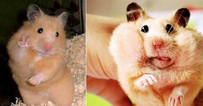 Cưng xỉu với màn giải mã mê cung của chú chuột hamster, vừa đáng yêu vừa gay cấn như series Vượt ngục - Ảnh 1.