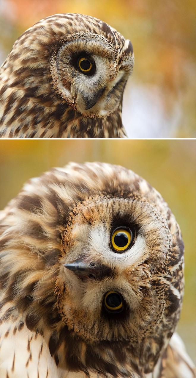 Chùm ảnh cho thấy lý do vì sao khi chụp ảnh chim thì không nên chụp từ phía trước - Ảnh 1.