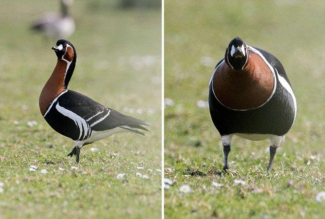 Chùm ảnh cho thấy lý do vì sao khi chụp ảnh chim thì không nên chụp từ phía trước - Ảnh 2.