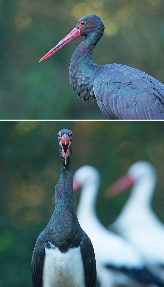 Chùm ảnh cho thấy lý do vì sao khi chụp ảnh chim thì không nên chụp từ phía trước - Ảnh 3.