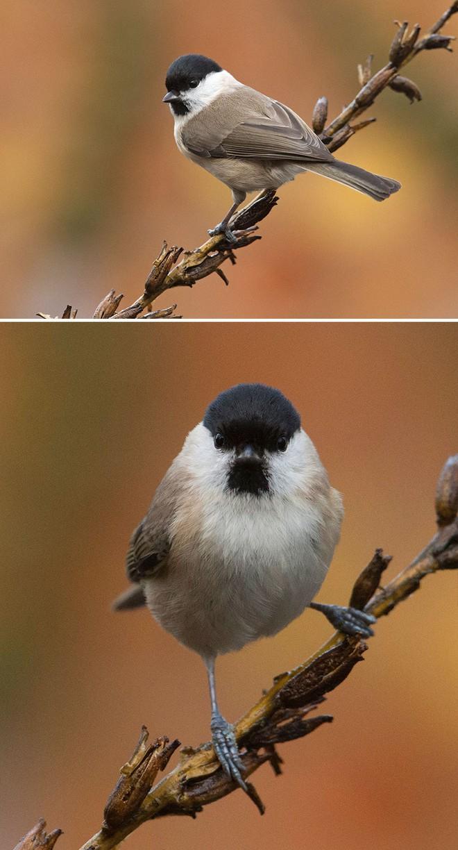 Chùm ảnh cho thấy lý do vì sao khi chụp ảnh chim thì không nên chụp từ phía trước - Ảnh 4.