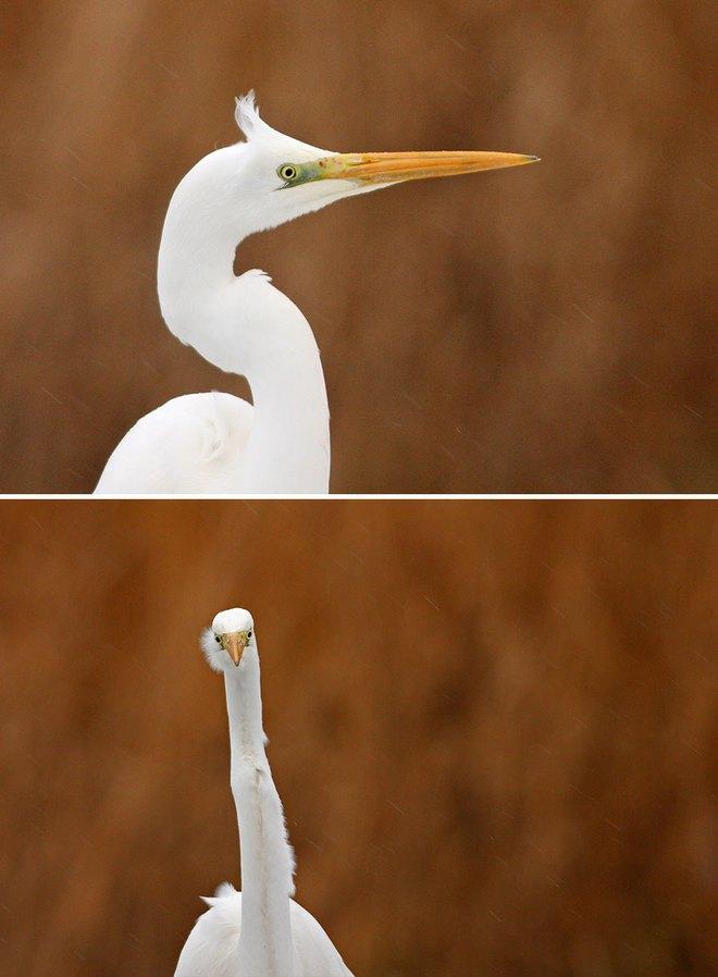 Chùm ảnh cho thấy lý do vì sao khi chụp ảnh chim thì không nên chụp từ phía trước - Ảnh 5.
