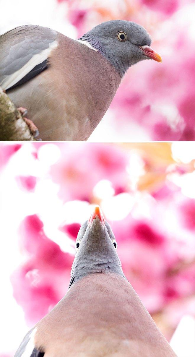 Chùm ảnh cho thấy lý do vì sao khi chụp ảnh chim thì không nên chụp từ phía trước - Ảnh 6.