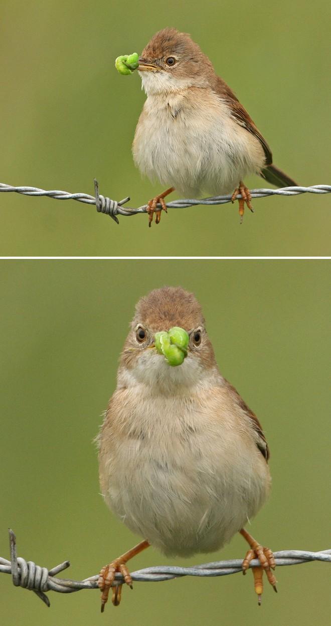 Chùm ảnh cho thấy lý do vì sao khi chụp ảnh chim thì không nên chụp từ phía trước - Ảnh 7.