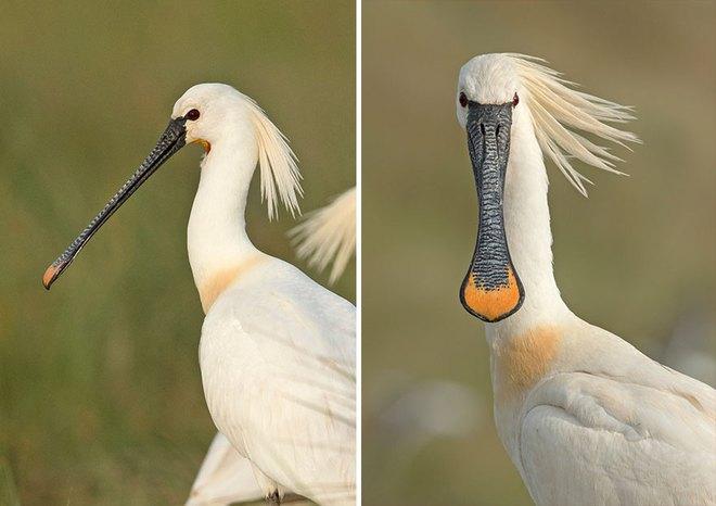 Chùm ảnh cho thấy lý do vì sao khi chụp ảnh chim thì không nên chụp từ phía trước - Ảnh 8.