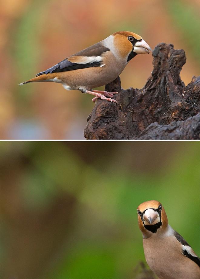 Chùm ảnh cho thấy lý do vì sao khi chụp ảnh chim thì không nên chụp từ phía trước - Ảnh 16.