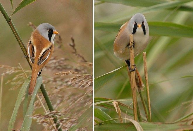Chùm ảnh cho thấy lý do vì sao khi chụp ảnh chim thì không nên chụp từ phía trước - Ảnh 17.