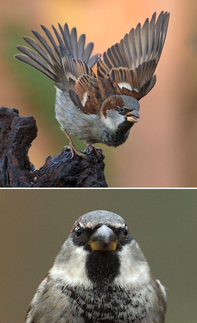 Chùm ảnh cho thấy lý do vì sao khi chụp ảnh chim thì không nên chụp từ phía trước - Ảnh 19.