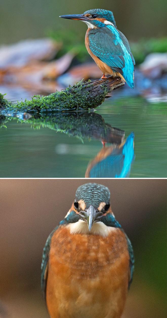 Chùm ảnh cho thấy lý do vì sao khi chụp ảnh chim thì không nên chụp từ phía trước - Ảnh 20.