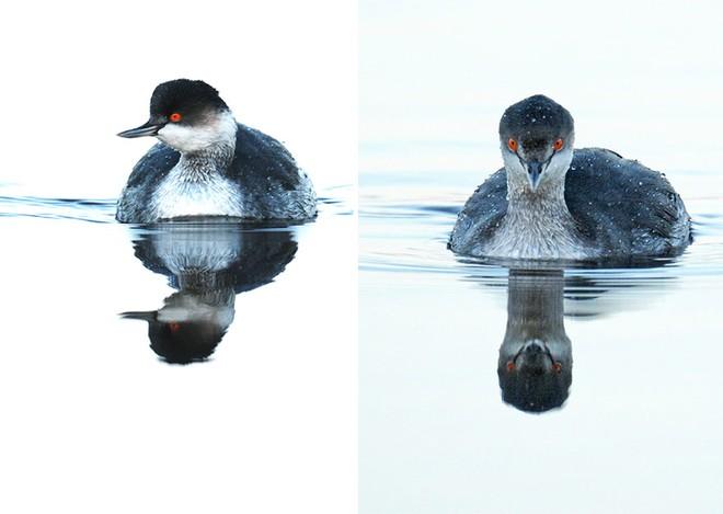 Chùm ảnh cho thấy lý do vì sao khi chụp ảnh chim thì không nên chụp từ phía trước - Ảnh 21.