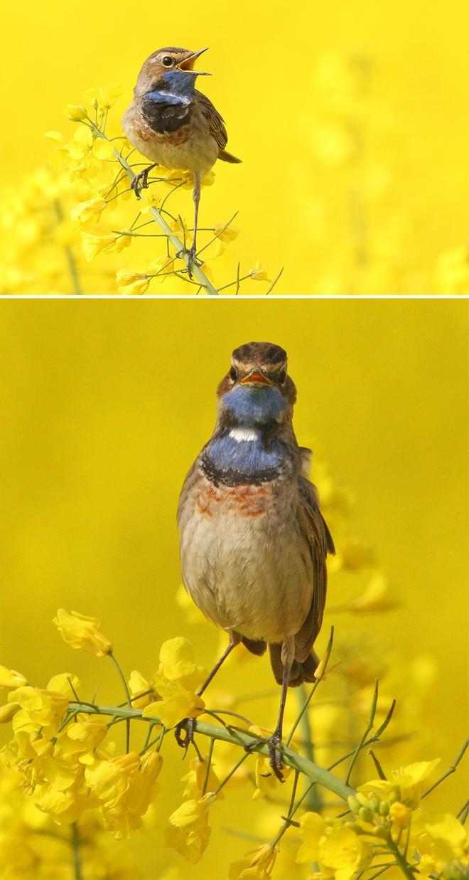Chùm ảnh cho thấy lý do vì sao khi chụp ảnh chim thì không nên chụp từ phía trước - Ảnh 22.