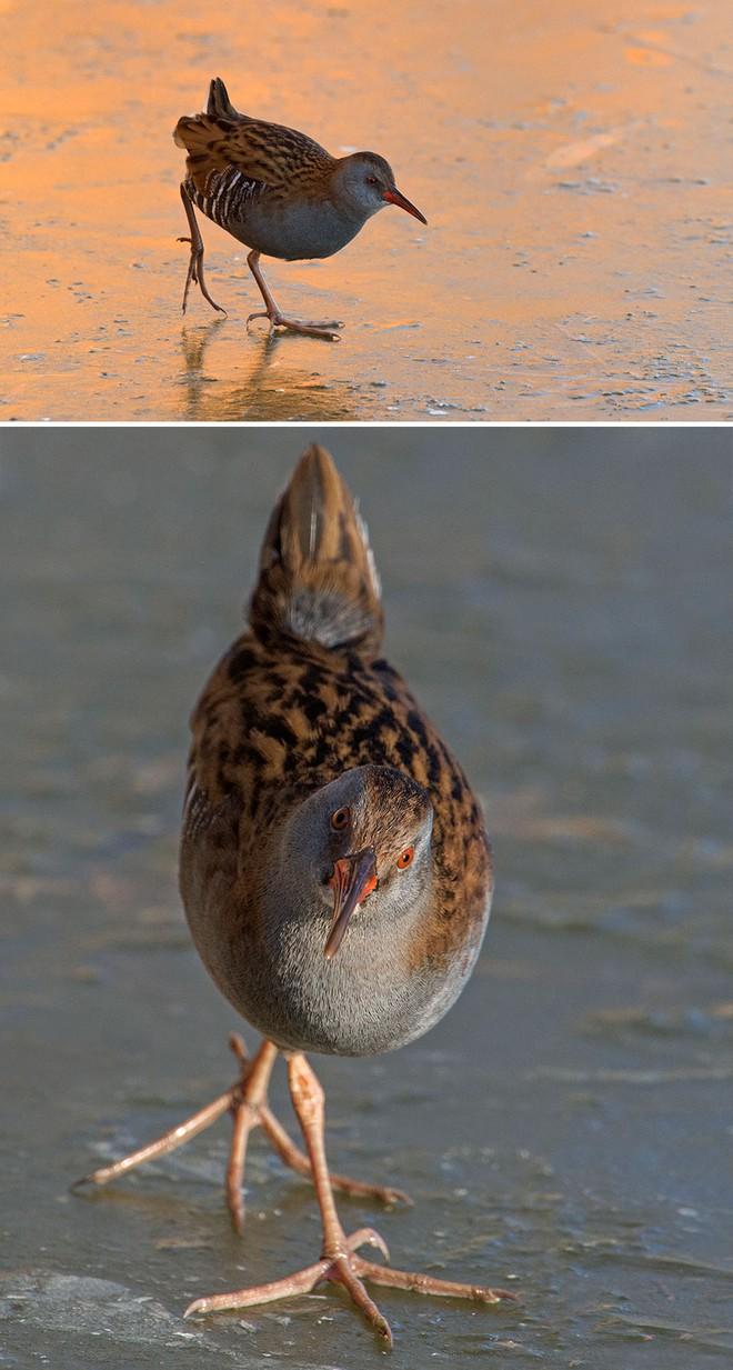 Chùm ảnh cho thấy lý do vì sao khi chụp ảnh chim thì không nên chụp từ phía trước - Ảnh 23.