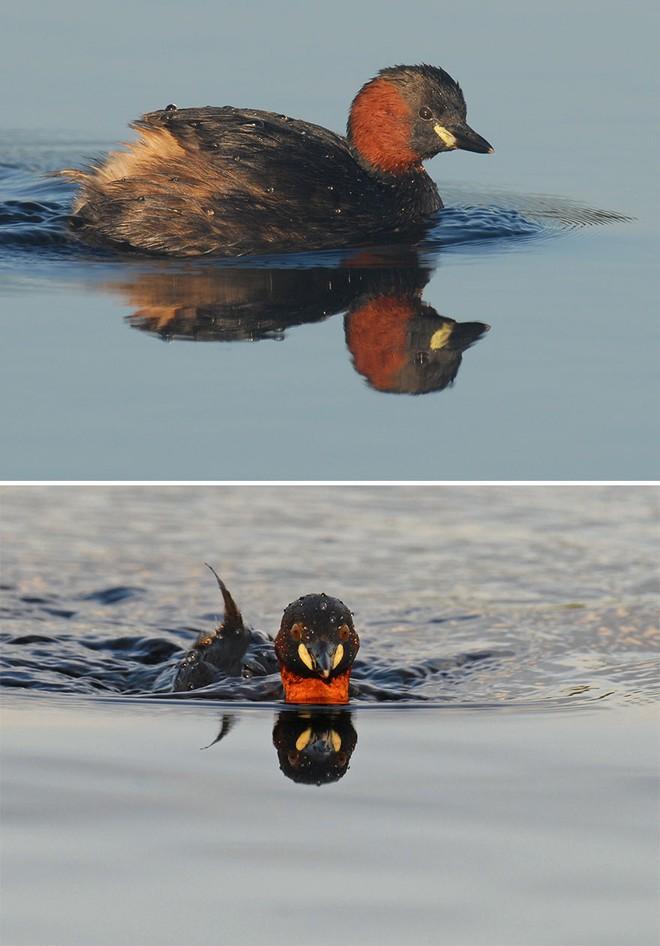 Chùm ảnh cho thấy lý do vì sao khi chụp ảnh chim thì không nên chụp từ phía trước - Ảnh 24.