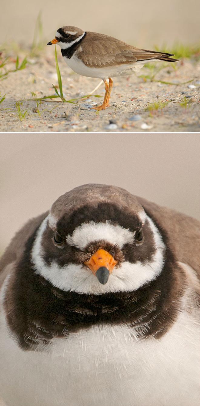 Chùm ảnh cho thấy lý do vì sao khi chụp ảnh chim thì không nên chụp từ phía trước - Ảnh 25.