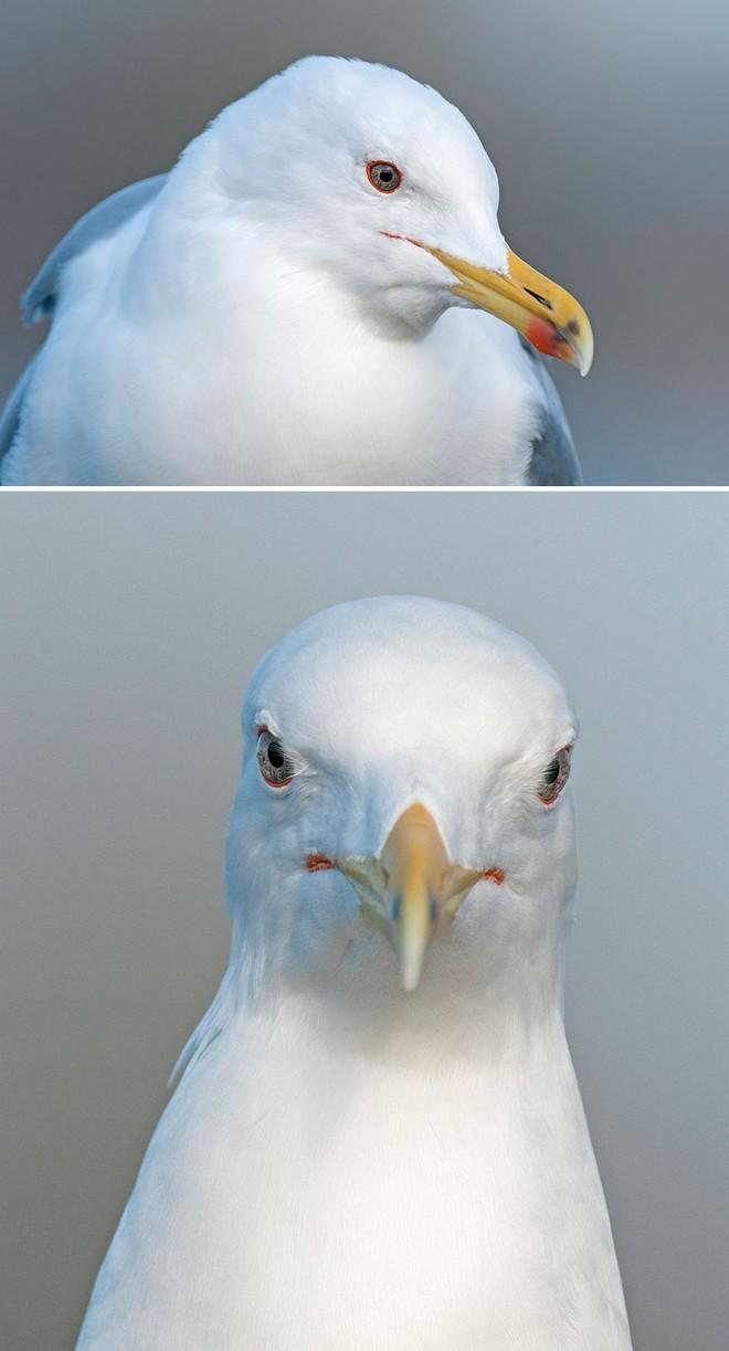 Chùm ảnh cho thấy lý do vì sao khi chụp ảnh chim thì không nên chụp từ phía trước - Ảnh 30.