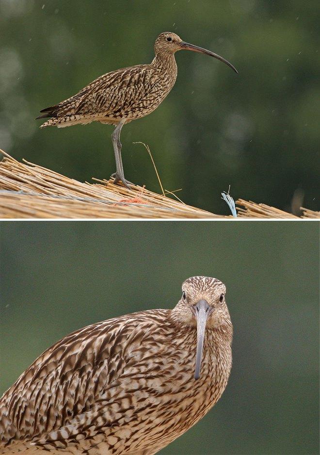 Chùm ảnh cho thấy lý do vì sao khi chụp ảnh chim thì không nên chụp từ phía trước - Ảnh 31.