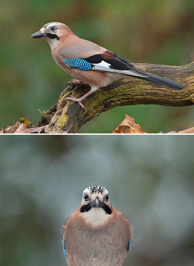 Chùm ảnh cho thấy lý do vì sao khi chụp ảnh chim thì không nên chụp từ phía trước - Ảnh 33.
