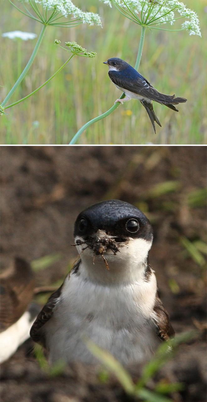 Chùm ảnh cho thấy lý do vì sao khi chụp ảnh chim thì không nên chụp từ phía trước - Ảnh 34.