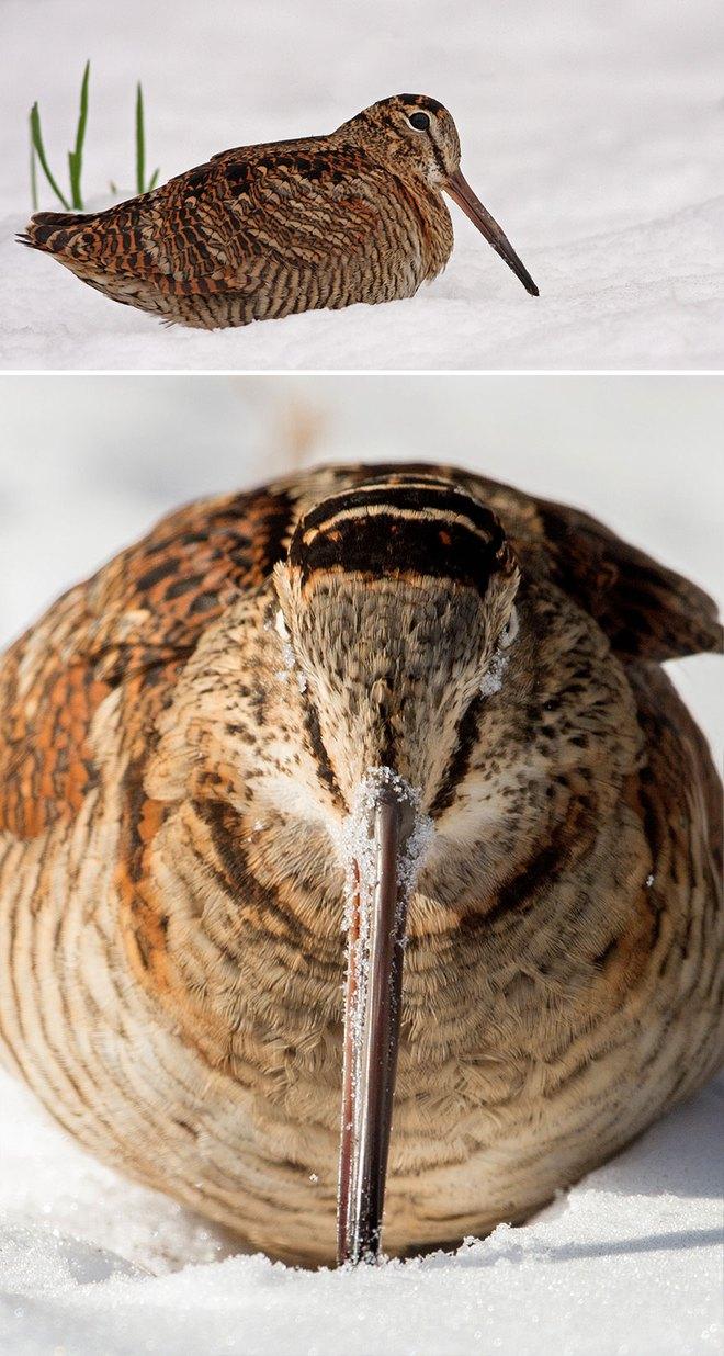 Chùm ảnh cho thấy lý do vì sao khi chụp ảnh chim thì không nên chụp từ phía trước - Ảnh 36.