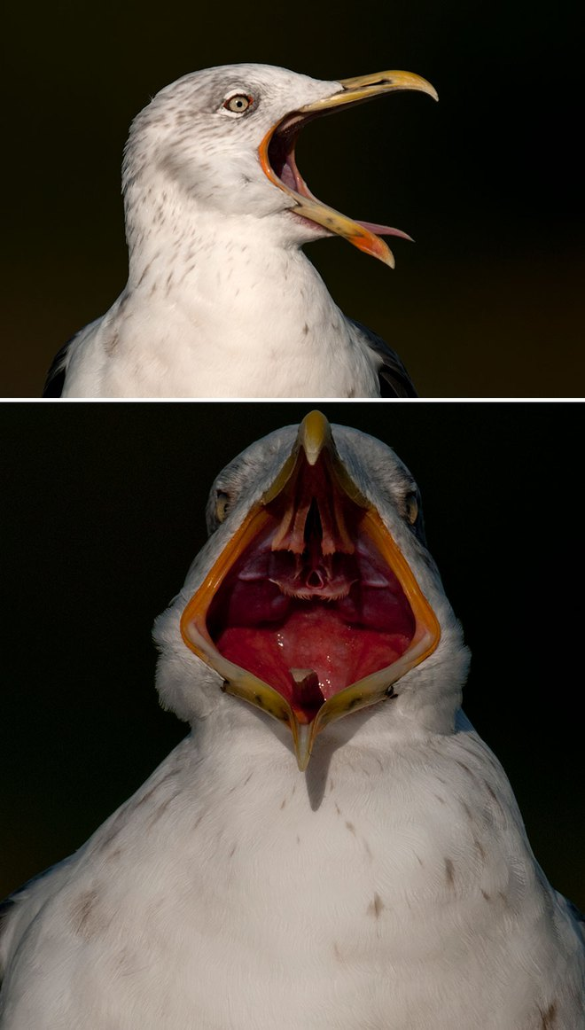 Chùm ảnh cho thấy lý do vì sao khi chụp ảnh chim thì không nên chụp từ phía trước - Ảnh 9.