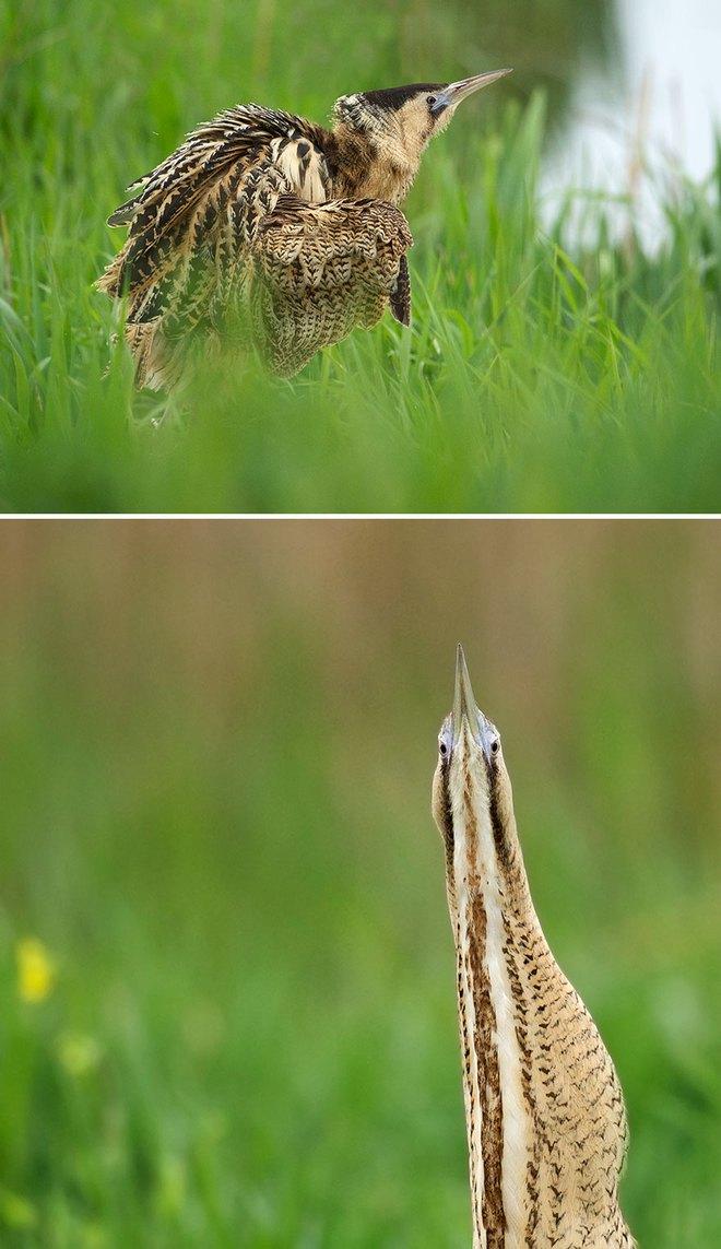 Chùm ảnh cho thấy lý do vì sao khi chụp ảnh chim thì không nên chụp từ phía trước - Ảnh 10.