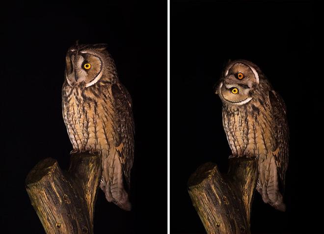 Chùm ảnh cho thấy lý do vì sao khi chụp ảnh chim thì không nên chụp từ phía trước - Ảnh 11.