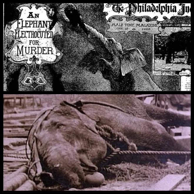 Câu chuyện đau lòng về chú voi Topsy và cuộc hành quyết công khai để thử sức mạnh của điện - Ảnh 5.