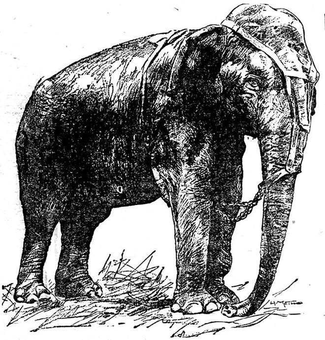 Câu chuyện đau lòng về chú voi Topsy và cuộc hành quyết công khai để thử sức mạnh của điện - Ảnh 1.