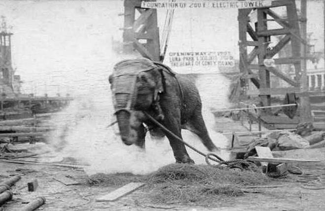 Câu chuyện đau lòng về chú voi Topsy và cuộc hành quyết công khai để thử sức mạnh của điện - Ảnh 4.