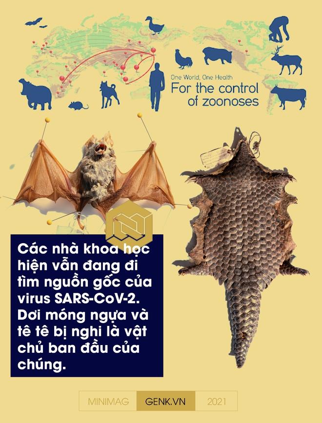 Một biên niên sử về virus: Từ những thiên thần của tiến hóa tới cơn ác mộng COVID-19 - Ảnh 18.