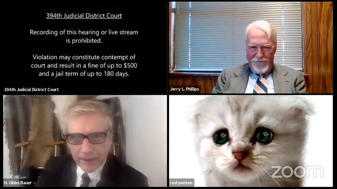 Quên tắt filter, vị luật sư biến thành chú mèo cute lạc lối ngay trong phiên toà - Ảnh 1.