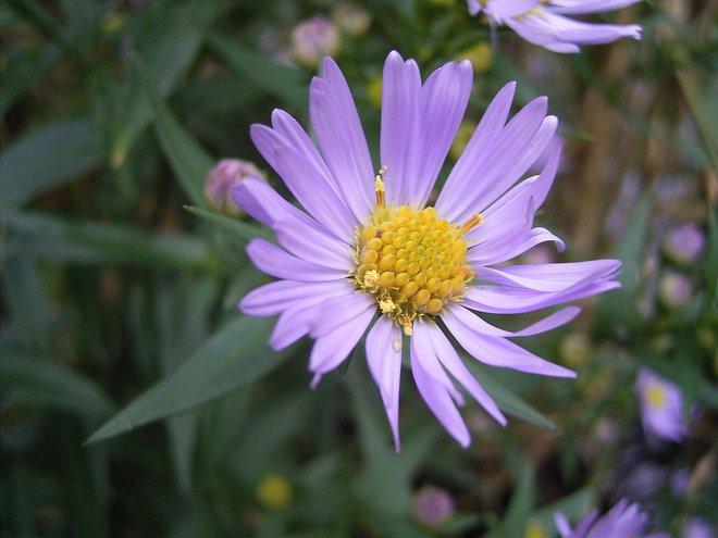 Lệnh cấm TikTok của Ấn Độ giúp một bức ảnh chụp hoa đạt 75 triệu lượt xem trong một ngày - Ảnh 1.