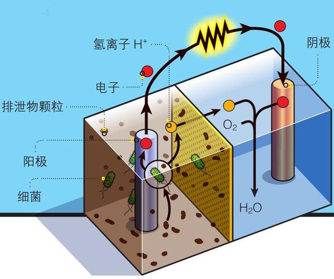 Phân cá có thể sẽ trở thành nguồn năng lượng mới cho robot hoạt động dưới nước - Ảnh 3.