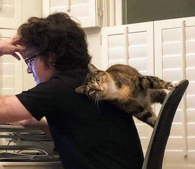 Chùm ảnh vui: Những hành động kỳ lạ đến không tưởng của loài mèo khiến các định luật vật lý trở nên vô nghĩa - Ảnh 10.