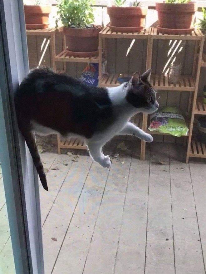 Chùm ảnh vui: Những hành động kỳ lạ đến không tưởng của loài mèo khiến các định luật vật lý trở nên vô nghĩa - Ảnh 11.