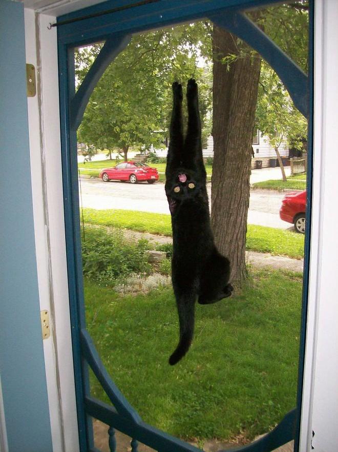 Chùm ảnh vui: Những hành động kỳ lạ đến không tưởng của loài mèo khiến các định luật vật lý trở nên vô nghĩa - Ảnh 12.