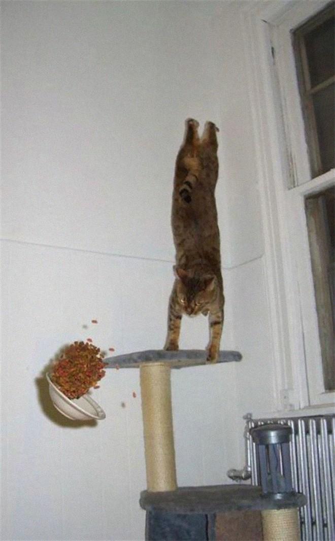Chùm ảnh vui: Những hành động kỳ lạ đến không tưởng của loài mèo khiến các định luật vật lý trở nên vô nghĩa - Ảnh 13.
