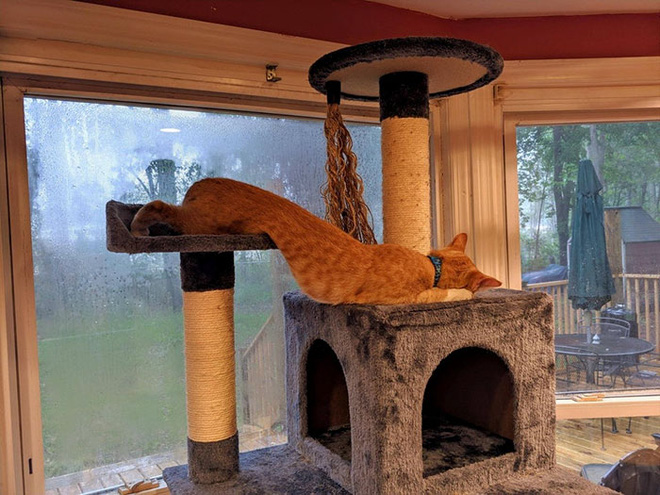 Chùm ảnh vui: Những hành động kỳ lạ đến không tưởng của loài mèo khiến các định luật vật lý trở nên vô nghĩa - Ảnh 17.