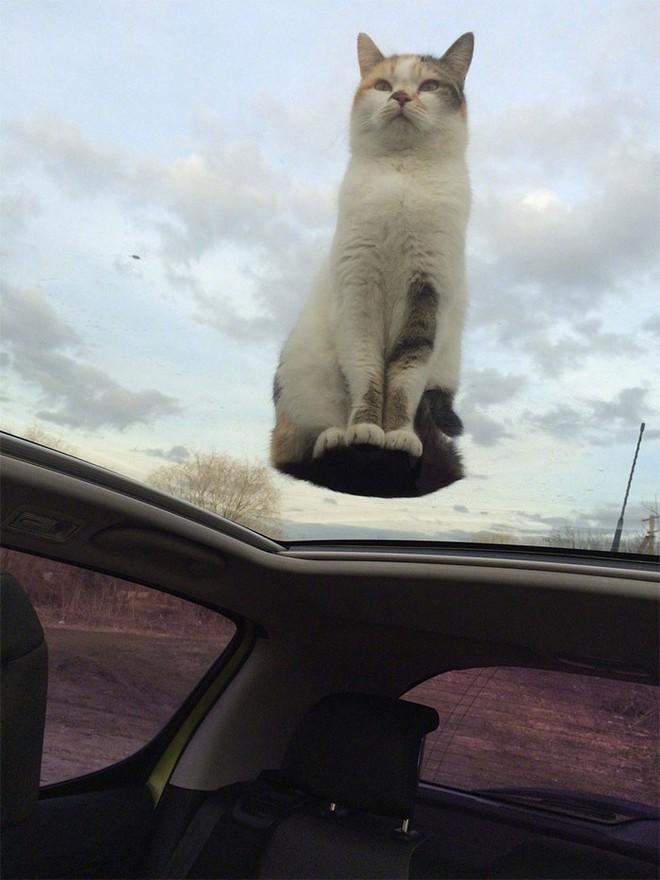 Chùm ảnh vui: Những hành động kỳ lạ đến không tưởng của loài mèo khiến các định luật vật lý trở nên vô nghĩa - Ảnh 18.