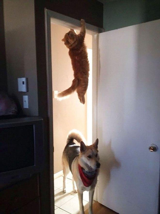 Chùm ảnh vui: Những hành động kỳ lạ đến không tưởng của loài mèo khiến các định luật vật lý trở nên vô nghĩa - Ảnh 2.