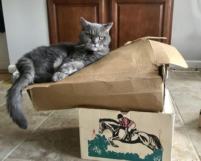Chùm ảnh vui: Những hành động kỳ lạ đến không tưởng của loài mèo khiến các định luật vật lý trở nên vô nghĩa - Ảnh 20.